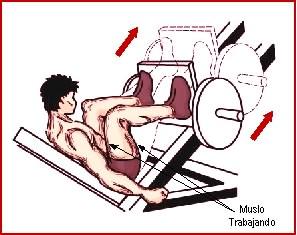 Prensa de maquina para piernas