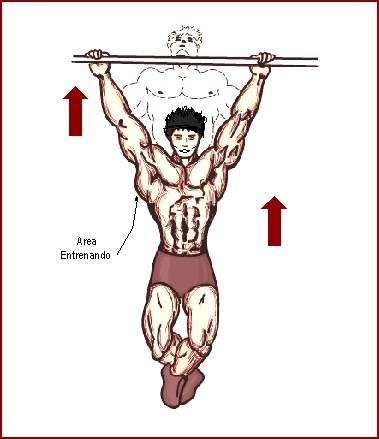 hacer musculos sin pesas