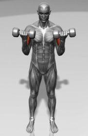 flexiones de biceps con mancuerna