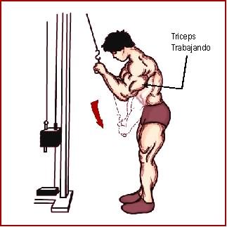 ejercicios para brazos lat down polea